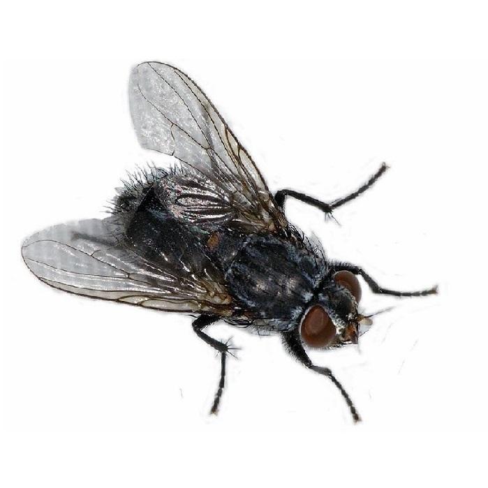 Уничтожение мух ПроКомфорт