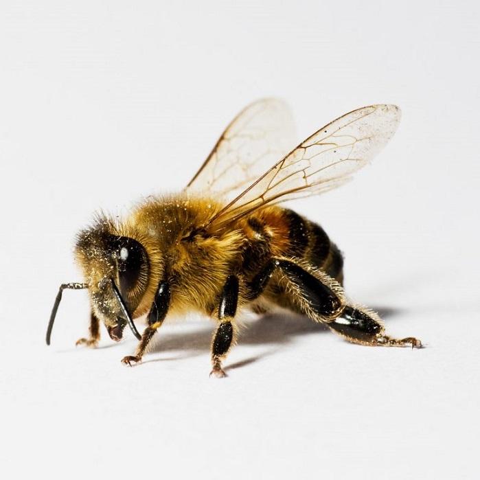 Борьба с пчелами от ПроКомфорт